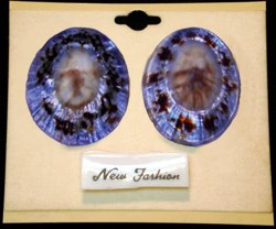 Blue Limpet Earrings - Click For Larger View