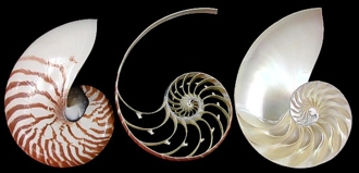 3 Section Nautilus set - Click For Larger View