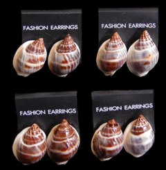 Phyrus Shell Earrings - Click For Larger View